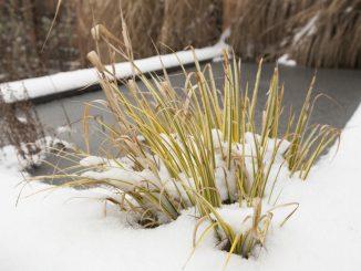 Zugefrorener Gartenteich