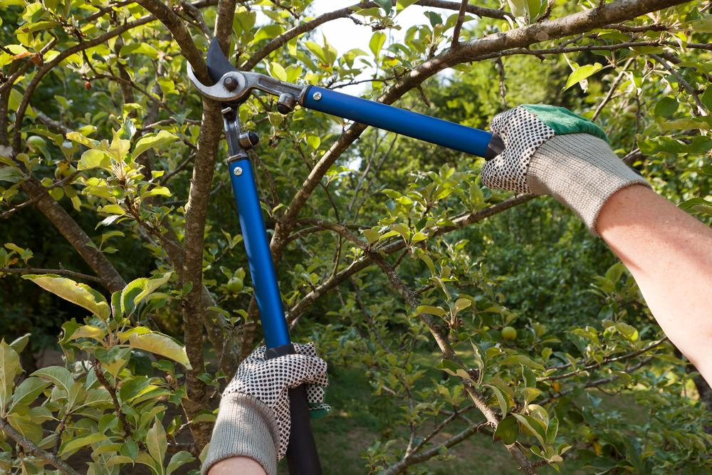 Apfelbaum Schneiden Wann : apfelbaum schneiden wann ist der beste zeitpunkt hauskauf ~ Watch28wear.com Haus und Dekorationen